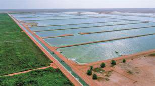 BAUER Group to expand the world�s biggest constructed wetland treatment plant in Oman